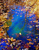 "The Circle of Seasons   <font size=""+1""><a href=""http://www.photographycorner.com/forum/showthread.php?t=102812"">See the voting results HERE!</a></font>"