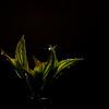Dews Light