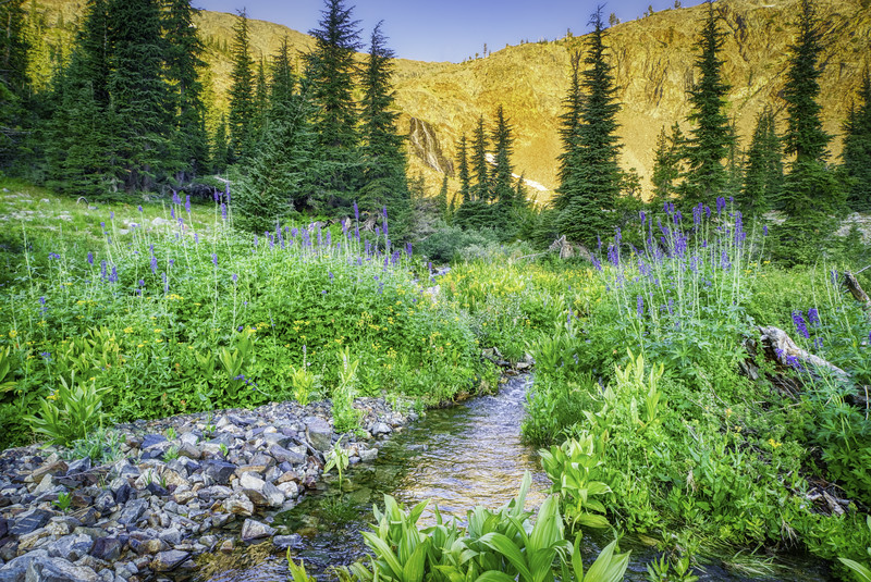 A gorgeous meadow behind Alta Morris Lake