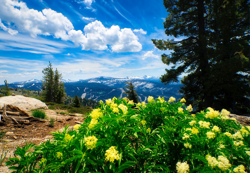 Flowers blooming along the trail to Ralston Peak