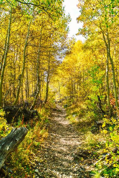 Aspen along the Green Creek Trail