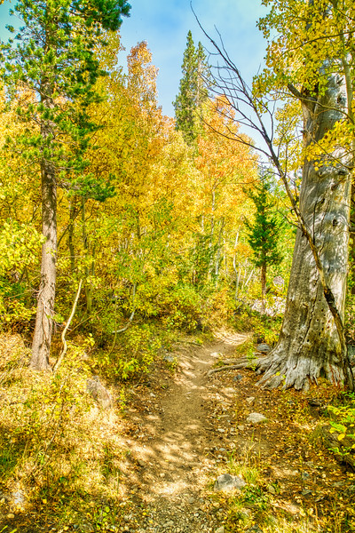 Fall Aspen along the Green Creek Trail