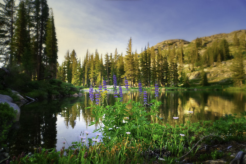 Flowers on the shore of Emigrant Lake
