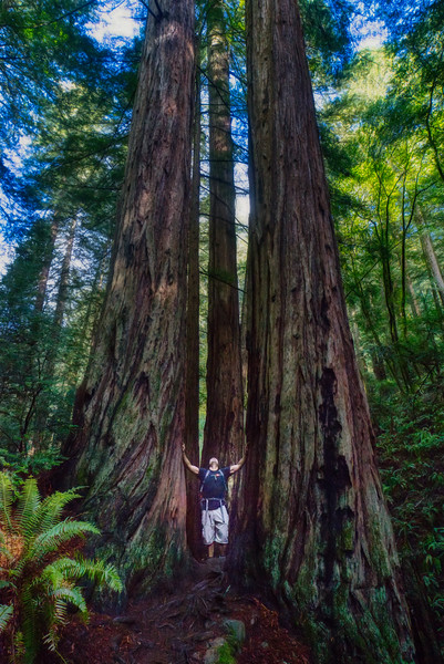 Jeff and the mighty redwoods