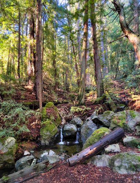 A small waterfall near Muir Woods