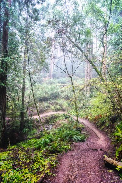 A foggy morning along the Ben Johnson Trail