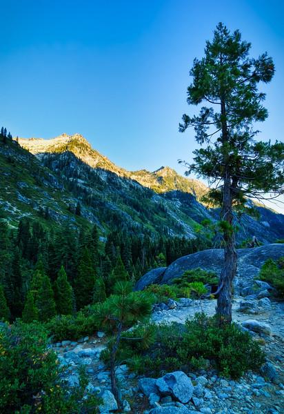 A lone tree above Canyon Creek