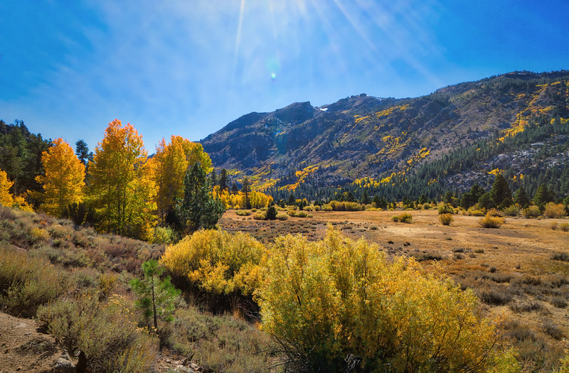 Leavitt Meadows in the Fall