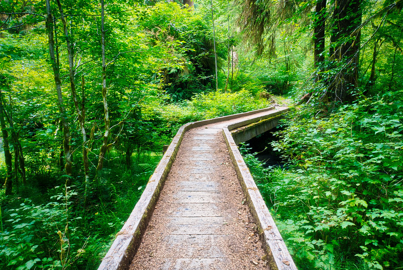 A bridge through the Hoh Rain Forest