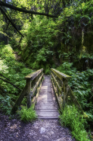 A bridge along the Steep Ravine Trail