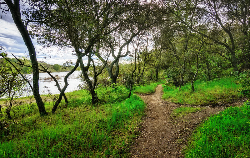 Spring along the American River