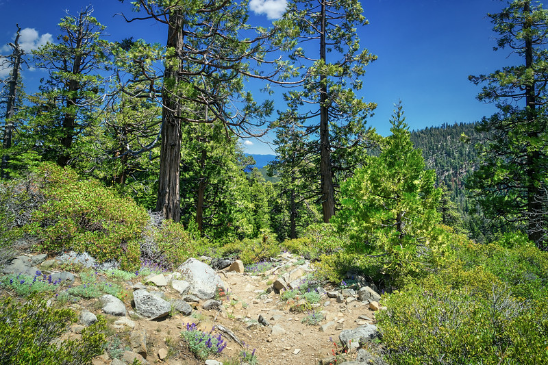 Meeks Creek Trail looking towards Lake Tahoe