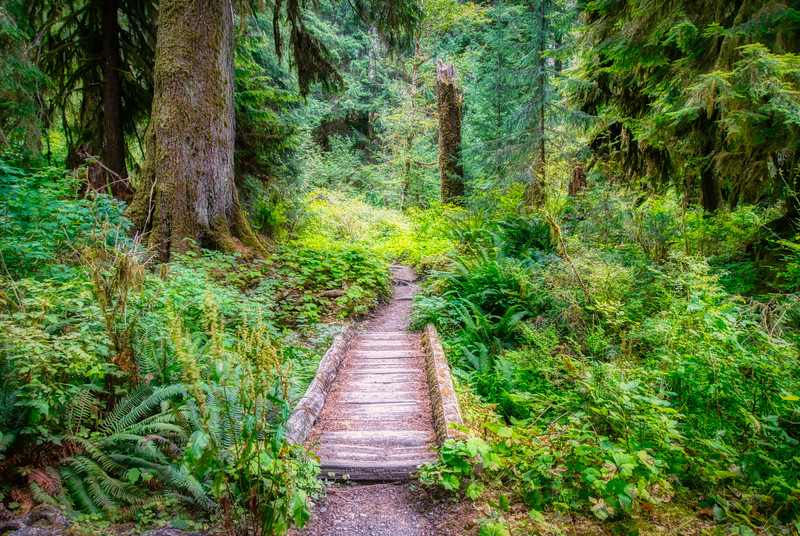 A bridge along the Hoh Rain Forest Trail