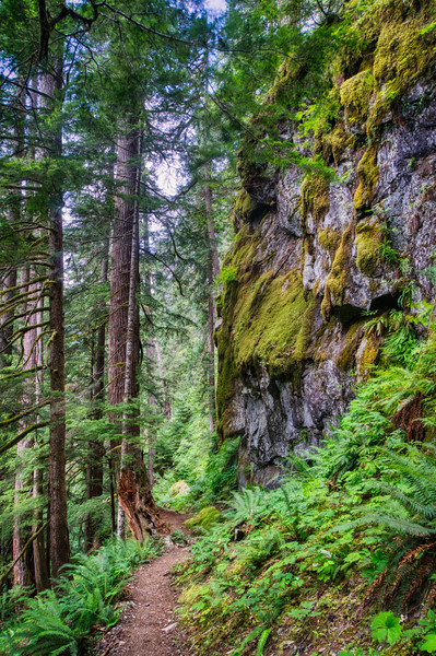 The Hoh River Trail, Olympic National Park