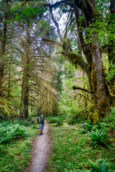 Ryan in awe of the Hoh Rain Forest