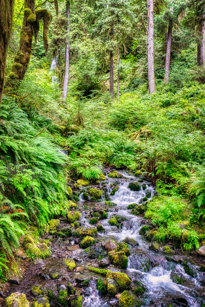 A cascade and waterfall along the Hoh Rain Forest