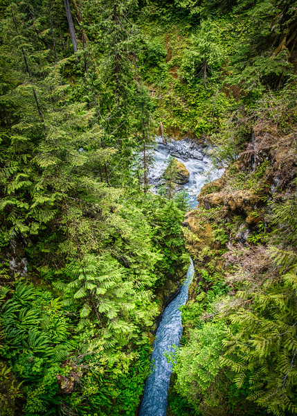 Looking down on the Hoh River