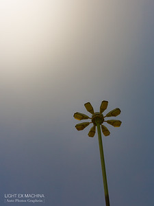 [ Auto Photos Graphein ] serie - the flower