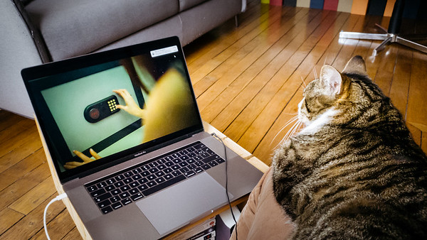 CatNetflix 😹 . Saviez-vous que Netflix avait ouvert une section pour les chats en cette période de confinement ? 😜 En tous cas, il est accro aux séries policières 👮♀️🍿📺 😻 . . #photographathome #covid19 #frommywindow #RestezChezVous #stayathome #confinement #paris #parisphoto #cat #chat #Netflix #lightexmachina #autophotosgraphein