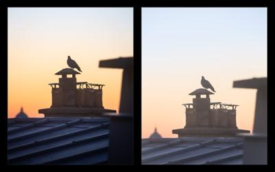 Aube . Je suis fasciné par notre perception de la lumière, des couleurs et de leurs subtiles variations chaque matin. 🌄 😊 Voici deux interprétations :  Gauche : sous le charme des couleurs Droite : dans la lumière diffuse du matin  Vidéo du développement en parallèle des deux photos ☞ https://www.instagram.com/p/CAHsl12Idcu/ . . #paris #parisphoto #toitsdeParis #aube #dawn #ville #oiseau #interprétation #instantané #snapshot #photographathome #covid19 #frommywindow #RestezChezVous #stayathome #paris #parisphoto #lightexmachina #autophotosgraphein