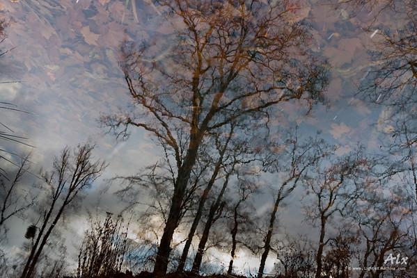 Ciel de feuilles  Jardins de Versailles Un ciel fantastique, reflet de mon imagination