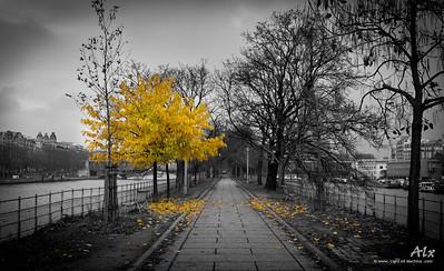 The yellow tree  Paris, sur l'Ile aux Cygnes. Cet arbre répandait ses feuilles autour de lui, en même temps qu'une lumière irréelle. Littéralement, il rayonnait.