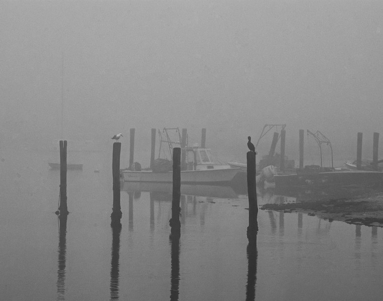 """""""Foggy Morning"""" - Sam Davis"""