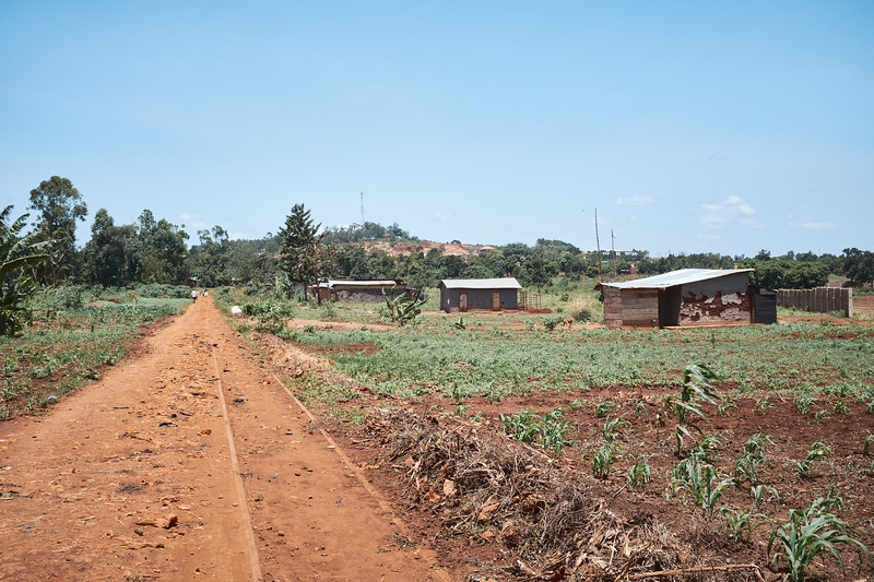As the economy declined in Walukuba, many of the lines of transportation fell into disrepair.  You would hardly know that a railroad track was here if it weren't for the foot traffic keeping vegetation from covering it.