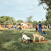 Children participating in drills prior to a game at a local play field. This field borders an agricultural veterinary clinic and is complete with associated sights, sounds, and smells.  Multiple schools share this play field and X-SUBA coaches come here a couple times a week.