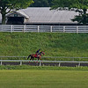 Letruska (middle in red) on track at Keeneland on July 2, 2021.