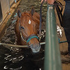 In the aqua-tred. Monomoy Girl taking a break from training and at the WinStar training center on June 16, 2021.