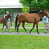 Hip 425 U. S. S. O'Brien with her Maclean's Music foal. Scenes, people and horses at The July Sale at Fasig-Tipton near Lexington, Ky. on July 11, 2021.