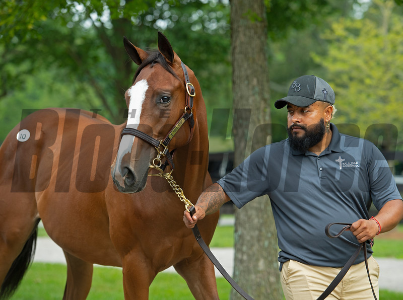 Hip 10 filly by Ransom the Moon out of Dancing Afleet at Ballysax Bloodstock.<br /> Scenes, people and horses at The July Sale at Fasig-Tipton near Lexington, Ky. on July 10, 2021.