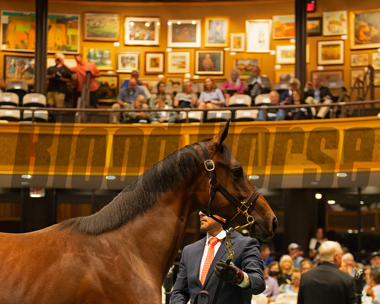 Hip 186 filly by Bolt d'Oro out of Scenic Road at South Point Sales, agent<br /> Sales scenes at Fasig-Tipton in Saratoga Springs, N.Y. on Aug. 10, 2021.