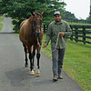 Broodmare Numero d'Oro (the dam of Wit and in foal to Authentic), at Sunday Morning Farm, Ky. on July 13, 2021.