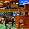 Hip 114 colt by Quality Road out of Hung the Moon from Taylor Made<br /> Sales scenes at Fasig-Tipton in Saratoga Springs, N.Y. on Aug. 10, 2021.