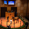 Hip 255 colt by City of Light out of Pleasant Mine at Warrendale<br /> Scenes, people and horses at The July Sale at Fasig-Tipton near Lexington, Ky. on July 13, 2021.
