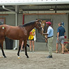 Taylor Made scene with Hip 287 colt by Bolt d'Oro out of Skip the Storm.<br /> Scenes, people and horses at The July Sale at Fasig-Tipton near Lexington, Ky. on July 10, 2021.