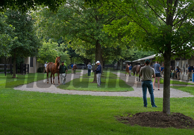 Scenes, people and horses at The July Sale at Fasig-Tipton near Lexington, Ky. on July 10, 2021.