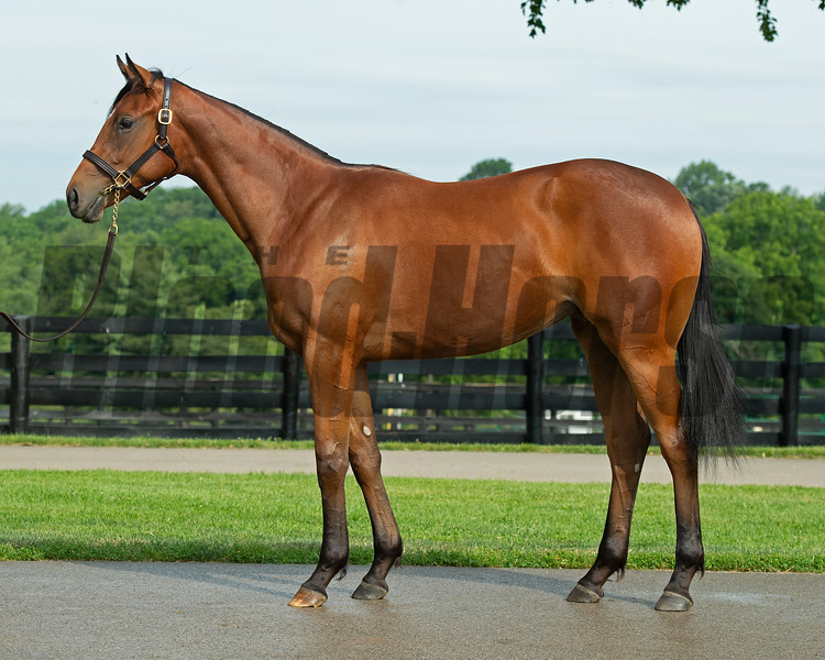 Justify yearling filly out of Emma's Encore at Seclusive Farm (Chris Baccari)  in Lexington, Ky., on June 25, 2021.