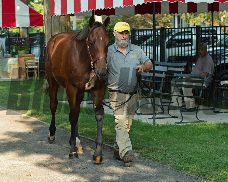 Hip 73 colt by Uncle Mo out of Dame Dorothy from Stone Farm<br /> Saratoga sales scenes at Fasig-Tipton in Saratoga Springs, N.Y. on Aug. 7, 2021.