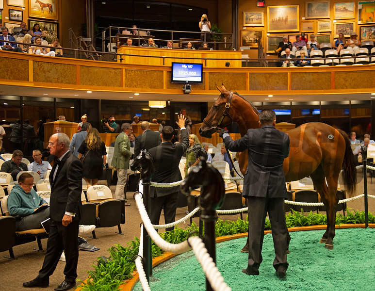 Scene with Hip 187 filly by Justify out of Screaming Skylar at Paramount<br /> Sales scenes at Fasig-Tipton in Saratoga Springs, N.Y. on Aug. 10, 2021.