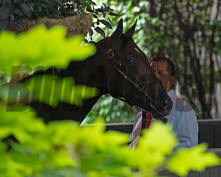 Waiting in the chute to sell next<br /> Scenes, people and horses at The July Sale at Fasig-Tipton near Lexington, Ky. on July 12, 2021.