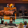 Hip 132 colt by Bolt d'Oro out of Lotta Kim at Hill 'n' Dale<br /> Sales scenes at Fasig-Tipton in Saratoga Springs, N.Y. on Aug. 10, 2021.