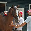 Hip 41 colt by Justify out of Appealing Zophie from Eaton Sales, agent<br /> Saratoga training and sales scenes at Saratoga Oklahoma track and Fasig-Tipton in Saratoga Springs, N.Y. on Aug. 6, 2021.