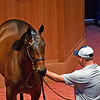 Hip 178 Munnys Gold (filly by Munnings out of Haraawa) at Four Star Sales<br /> Scenes, people and horses at The July Sale at Fasig-Tipton near Lexington, Ky. on July 13, 2021.
