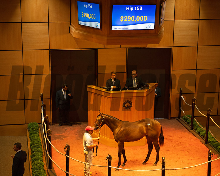 Hip 153 colt by Uncle Mo out of Fame and Fortune from Eaton Sales<br /> Scenes, people and horses at The July Sale at Fasig-Tipton near Lexington, Ky. on July 13, 2021.