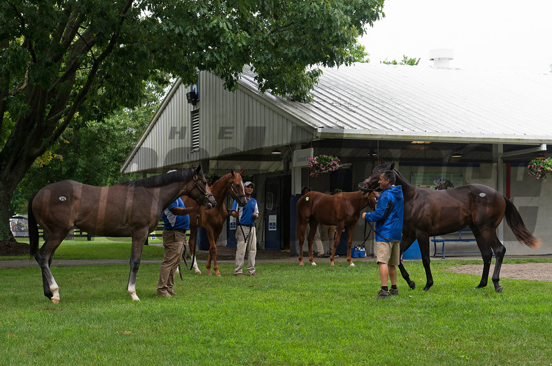 Yearlings waiting to show at Paramount. Scenes, people and horses at The July Sale at Fasig-Tipton near Lexington, Ky. on July 10, 2021.