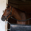 Letruska in her stall at Keeneland on July 3, 2021.
