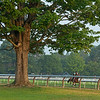 morning training at Oklahoma track<br /> Saratoga training and sales scenes at Saratoga Oklahoma track and Fasig-Tipton in Saratoga Springs, N.Y. on Aug. 6, 2021.